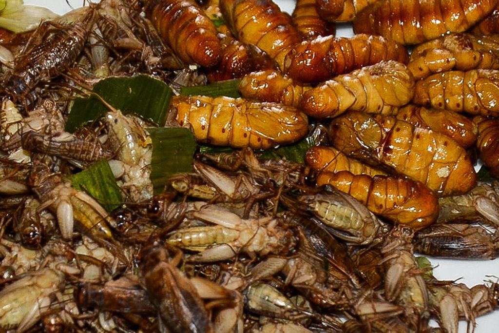 Zu Gast im Isaan, oder auch der Tag an dem wir das erste Mal Würmer aßen.