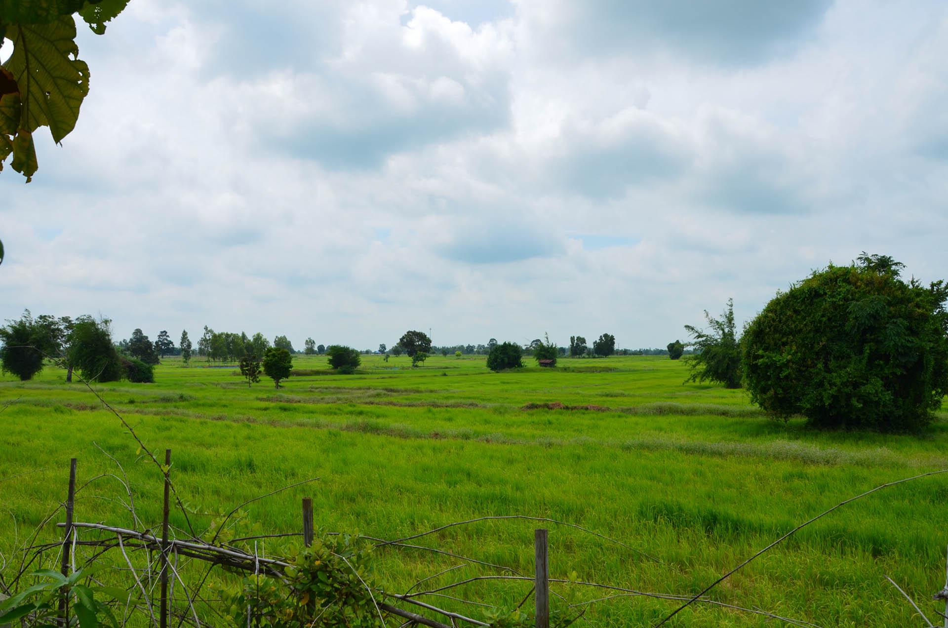 in mitten von Reisfeldern